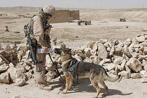 Una tierna historia de amistad en la guerra de Afganistán