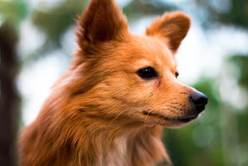 Los primeros 6 signos del horóscopo canino