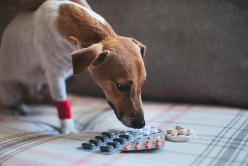 ¿Se puede dar aspirina o similares a un perro?