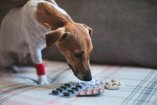 La aspirina para perros