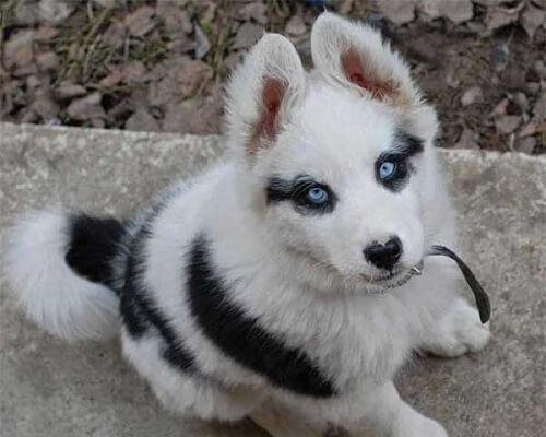 8 perros únicos por sus marcas en la piel