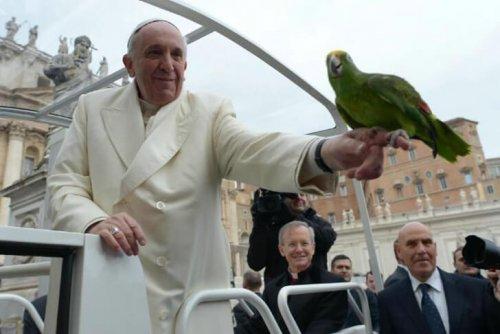 El Papa Francisco y los animales