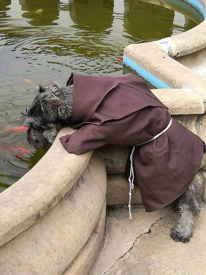 Monk dog looking at a fountain