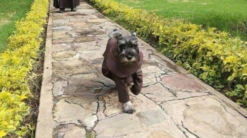 Descubre una historia del perro monje