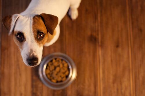Si tu perro tiene problemas estomacales, sigue estos simples consejos