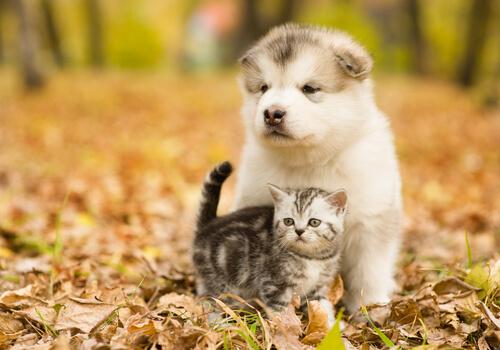 Perros o gatos: ¿quién gana?