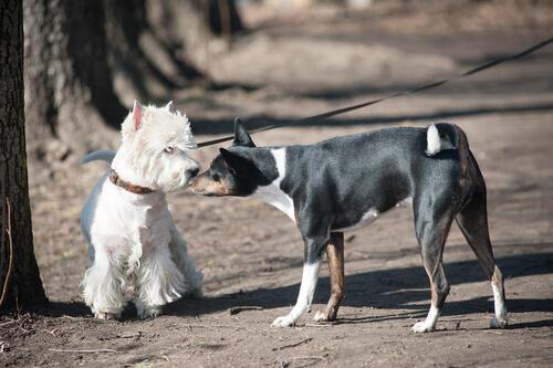 Perro olisqueando a otro de su especie.