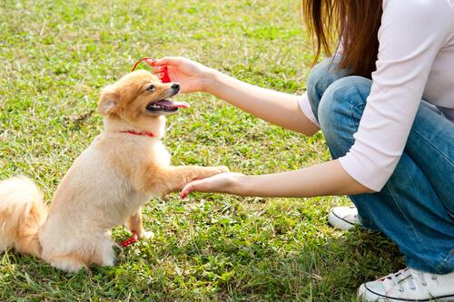 Cómo saludar a un perro por primera vez