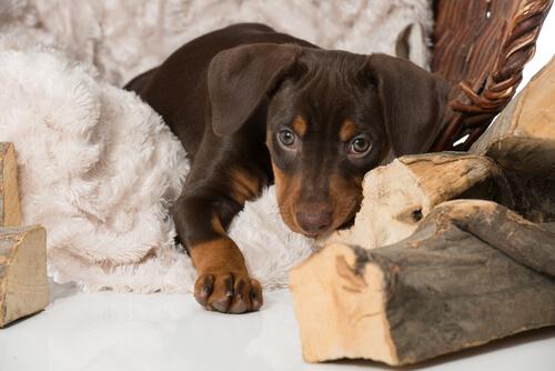 Cómo ayudar a tu perro a superar el luto por otra mascota