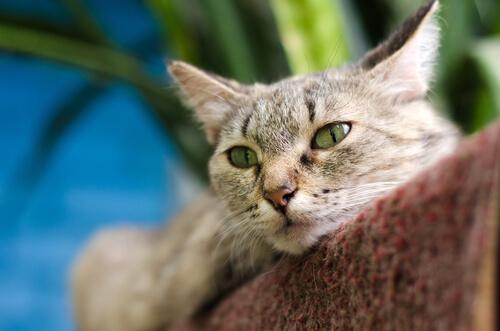 Los gatos se pueden curar a sí mismos con un ronroneo