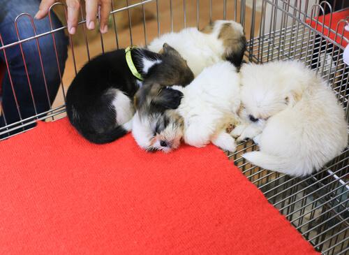 Descubre la ciudad donde solo se podrán vender mascotas rescatadas