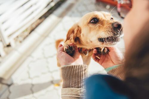 10 cosas que tu perro quiere que sepas