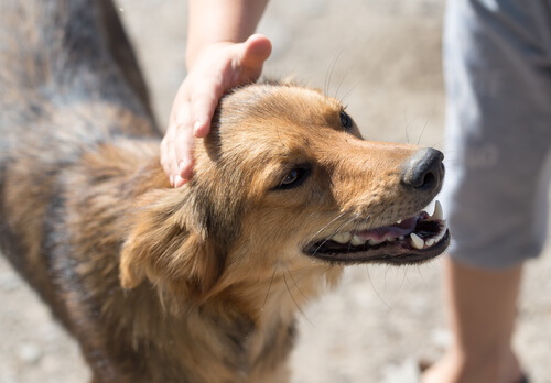 Persona acariciando a un perro