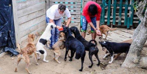 Ordenan desalojar una fundación con animales rescatados