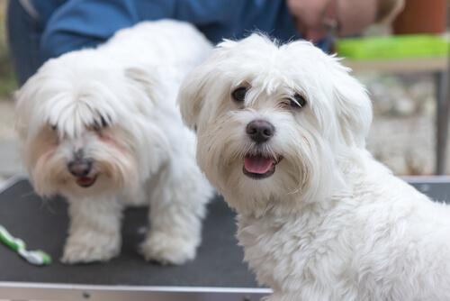 Tres consejos esenciales para cuidar a tu perro