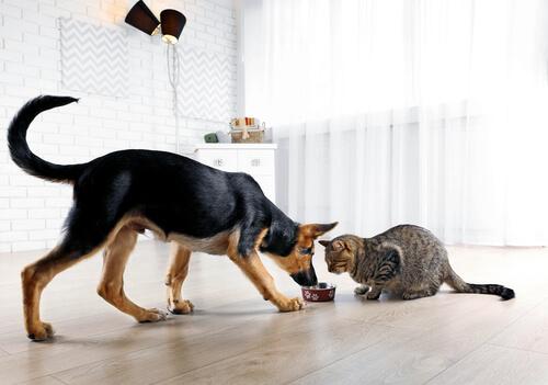 Qué no hacer para desequilibrar a un perro o a un gato