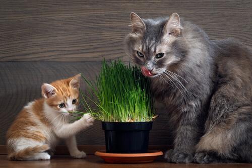 ¿Qué hacer en caso de envenenamiento de gatos?