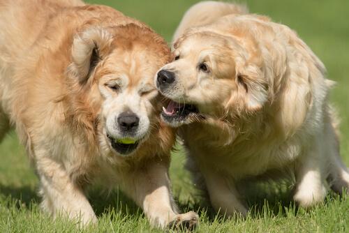 Cómo lograr evitar que el perro muerda