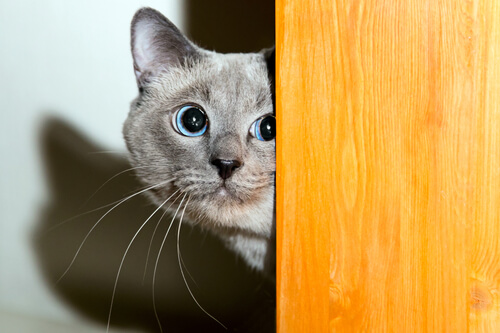 ¿Los gatos también tienen miedo a los petardos?