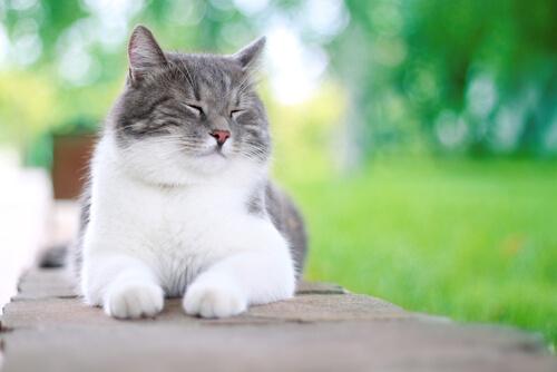 5 cosas que pueden hacer feliz a un gato
