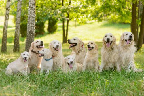 Más sobre el horóscopo canino