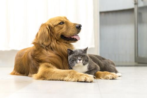 ¿Se debe llamar 'cosas' a los animales? ¡Muchos están luchando por que no sea así!
