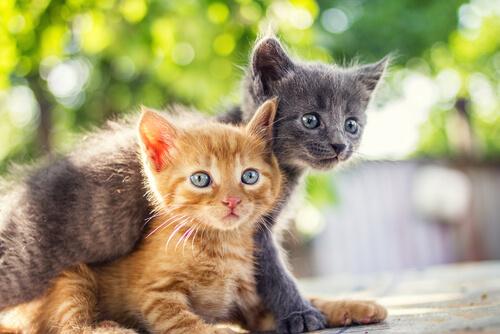 Se crea el primer perfume con olor a gato