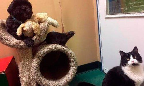 Perro, gato y rata, 3 amigos inseparables