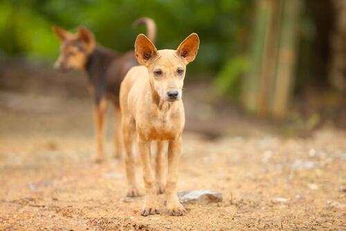 Esperanza de vida para estos perros