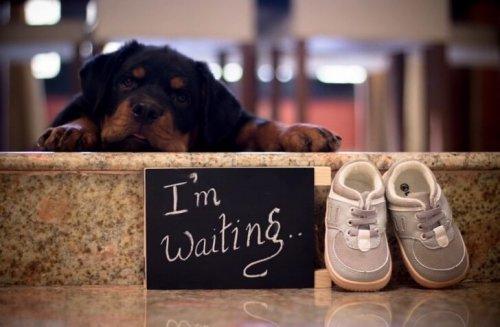 La respuesta de unos futuros papás a la sugerencia de deshacerse de sus perros