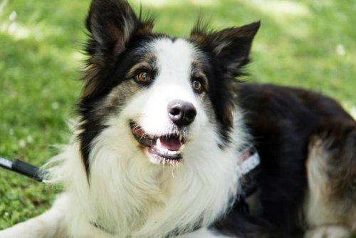 Este perrito salva vidas de otros perros detectando venenos en parques