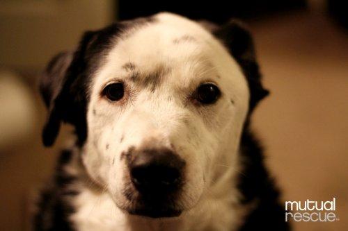Cómo un perro le salvó la vida a su dueño con obesidad