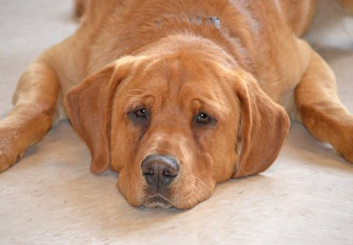 La historia de Eastwood, el perro que se quedó solo