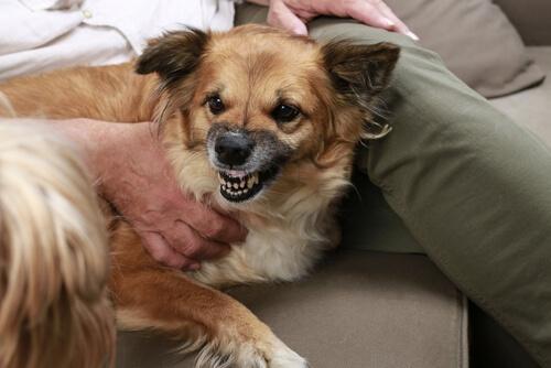 Agresividad en los perros
