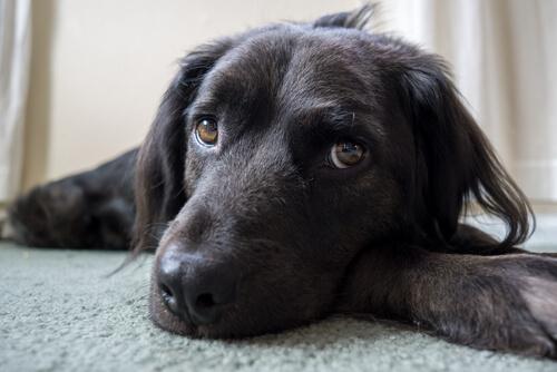6 cosas que crees que gustan a tu perro, pero no es así