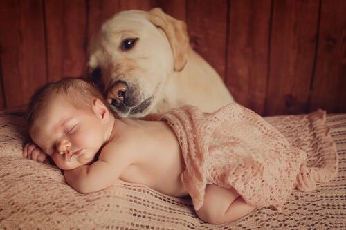 Presentarle el bebé a tu mascota