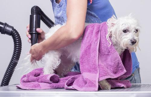 Los riesgos de nudos en el pelaje de nuestras mascotas