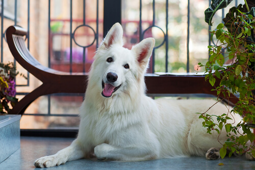 Qué precauciones tomar con tu mascota si tienes balcón en casa