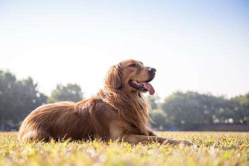 ¿Cómo identificar si tu perro está sano por sus heces?