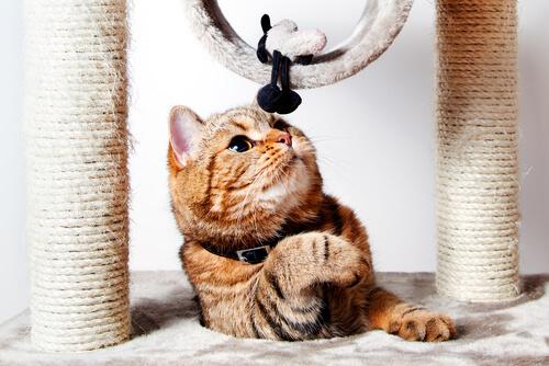 Gato con un rascador