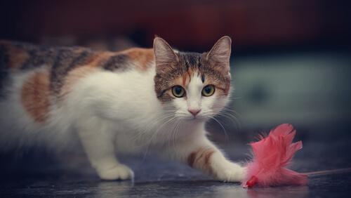 gato brincando com brinquedo de penas