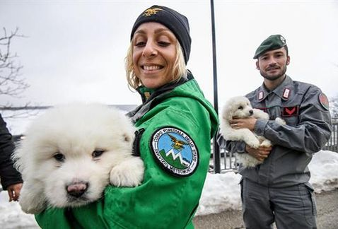 El alud en Italia atrapa a tres cachorros que son rescatados
