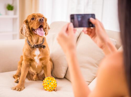 cachorro posando para foto