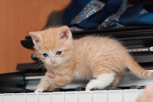 10 Beneficios De Tener Un Gato En Casa Mis Animales