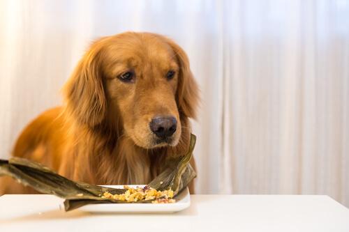 ¿Sabes que existe la comida congelada para perros?