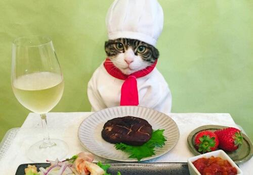 El gato Maro, las redes sociales, y su curioso Instagram