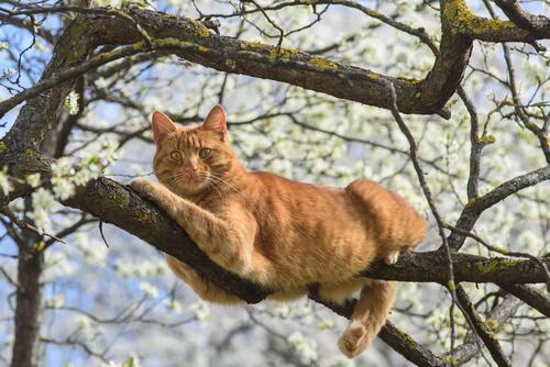 ¿Cómo ayudar a un gato que cayó desde un sitio alto?