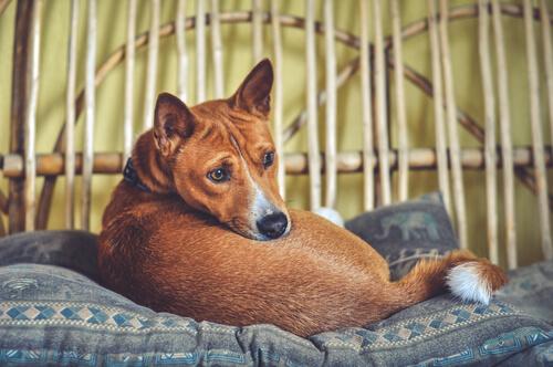 Insomnio en el perro: qué podemos hacer los dueños