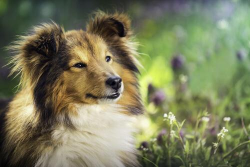 Diez consejos para tener un perro equilibrado