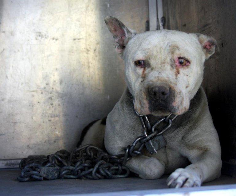 Esta perrita conoció mimos tras 2 años de estar encadenada